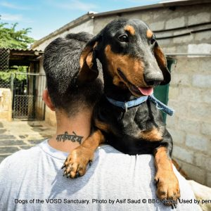 Surrender dogs to VOSD Dog Sanctuary (www.vosd.in)
