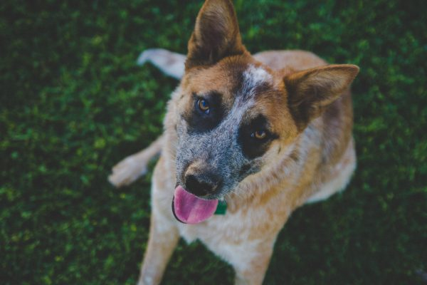 VOSD Hospice for Old Stray Dogs