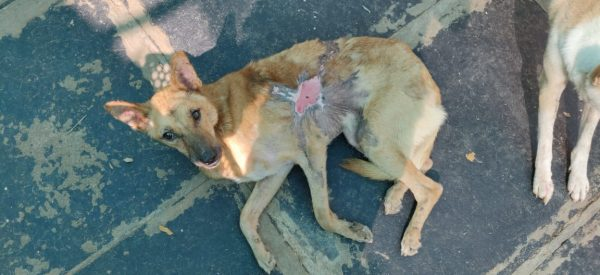 Sheru Acid Attack Survivor VOSD
