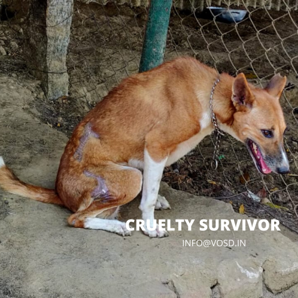 SUPPORT CRUELTY SURVIVOR DOG VOSD SANCTUARY